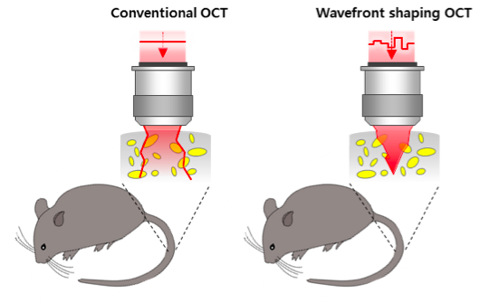 a-depth-enhanced-method-in-deep-tissue-imaging-of-a-living-mouse-01