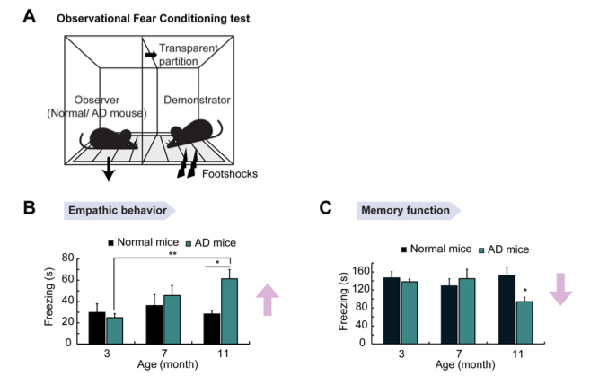 Figure 1. AD mice showed elevated fear response on the suffering of a demonstrator mouse