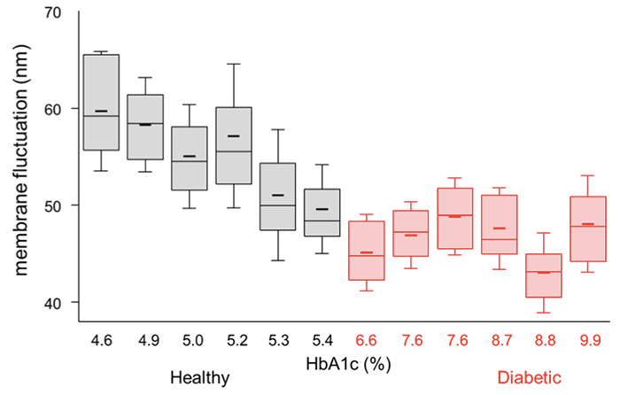 Figure 3 Box plots for RBC membrane fluctuations of all subjects in increasing order of HbA1c level. Error bars and short horizontal lines indicate the sample standard deviations and mean values. Each box plot contains a median value with upper and lower quartiles.